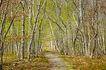 The springtime forest under Champlain Mountain, in Acadia National Park, Maine, USA