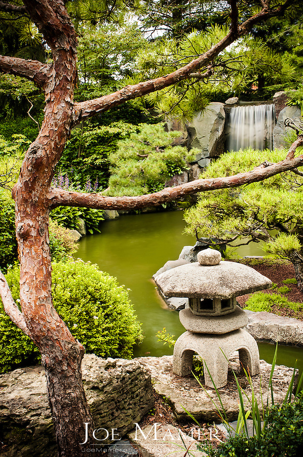 Lantern and koi pond at the Minnesota landscape arboretum Japanese garden.
