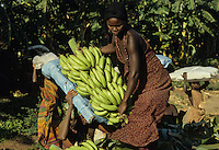 Somalifruits banana Planc.
