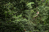 A young lady on a zip line in the jungle of Costa Rica.