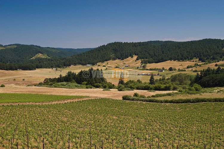 Vineyard, farms and forested hills;  Lorane Valley, Oregon.