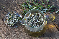 Beifuss-Tee, Beifusstee, Tee, Kräutertee, Heiltee. Gewöhnlicher Beifuß, Beifuss, Artemisia vulgaris, Mugwort, common wormwood, tea, herbal tea, herb tea, L'Armoise commune, Armoise citronnelle