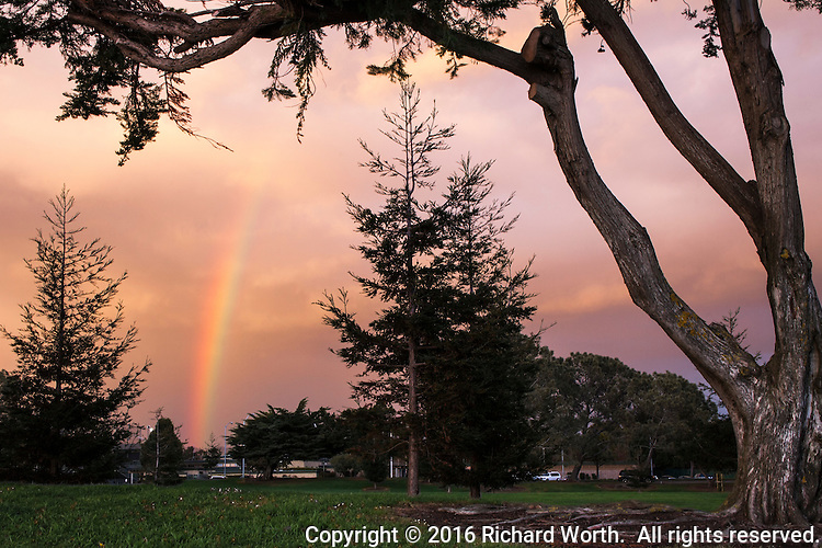 A rainbow rises, framed by trees and against a background of clouds painted in sunset light at San Leandro Marina Park.
