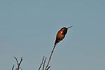 Cari's Land Birds