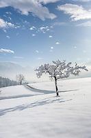 Germany, Upper Bavaria, Chiemgau, between Ruhpolding and Siegsdorf: winter scenery | Deutschland, Oberbayern, Chiemgau, zwischen Siegsdorf und Ruhpolding: Winterlandschaft