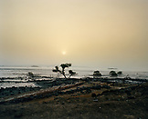 ERITREA, Akello, camels walk through the landscape near the town of Akello
