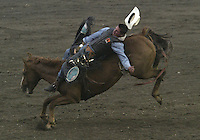 Bareback Riding Pro Rodeo