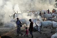 SOUTH SUDAN Bahr al Ghazal region , Lakes State, village Yeri cattle camp near Rumbek, Dinka shepherd with Zebu cow / SUED-SUDAN  Bahr el Ghazal region , Lakes State, Dorf Yeri, Dinka Hirte mit Zebu Rindern im cattle camp bei Rumbek