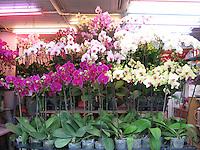 Orchids, Hong Kong Flower Market