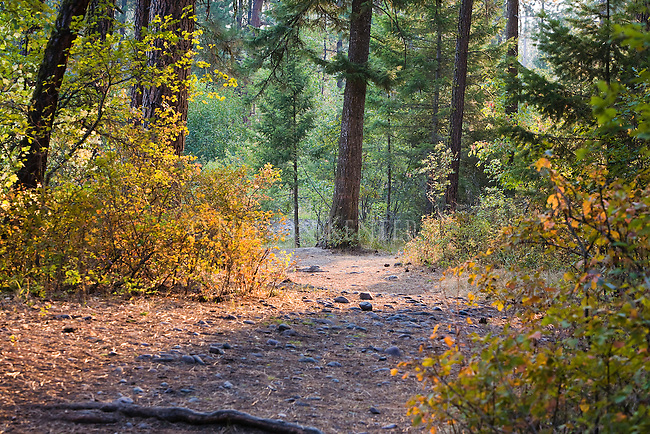 A trail through the Lincolnwood area along Rattlesnake Creek in missoula, Montana
