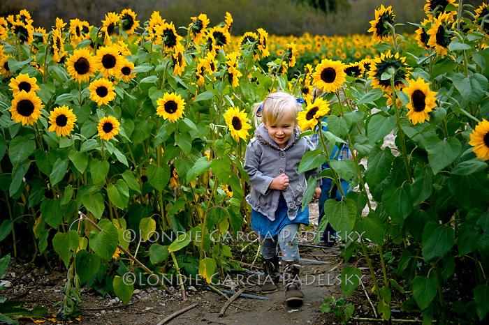 Kids having fun in a sunflower field, Central Coast of California