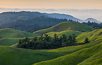 Evening Fog, Mt. Tam