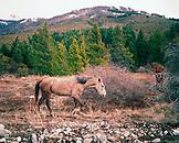 ARGENTINA, Patagonia, horse grazing