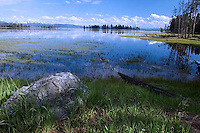 High water from spring runoff changes the ecology of this meadow, at least temporarily.<br />