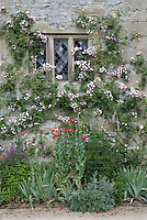 Climbing roses (Rosa) growing over a window next to a summer border in the Lower Garden at Haddon Hall