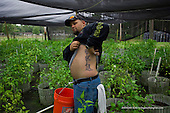 Jacksonville, Florida<br /> November 5, 2013<br /> <br /> Veteran's sustainable farm founded by Purple Heart veteran Adam Burke and managed by Afghan and Iraqi veteran Steve Ellseberry.<br /> <br /> While picking peppers Steve displays a tattoo he has to honor his friends killed in action in both Iraq and Afghanistan where he had several tours.<br /> <br /> He plans to tatoo the their names around the image in the coming year.