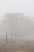A fence runs through the mist, separating the Deep Creek Conservation Park from the surrounding farmland.