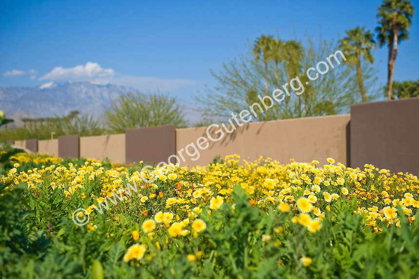Desert wildflowers in foreground with back drop of mountains and a brown wall