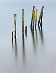 Old Posts in Derwent Water, Lake District, England