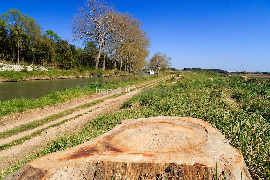 France, Aude (11), Ouveillan, canal du midi, platanes atteints par le chancre coloré (Ceratocystis platani) récemment abattus // France, Aude, Ouveillan, remains of plane trees affected by canker stain (Ceratocystis platani)