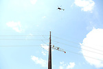 Helicopter Line Work on the JCP&L Ocean View Transmission Project in Jackson, New Jersey. 7/12/16
