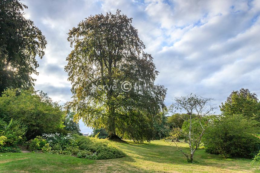 France, Sarthe (72), Le Lude, château et jardins du Lude, jardin de la Source, hêtre pourpre
