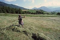 Europe/France/Midi-Pyrénées/09/Ariège/Couserans/Mijanès : Fenaison et Paysane<br /> PHOTO D'ARCHIVES // ARCHIVAL IMAGES<br /> FRANCE 1980