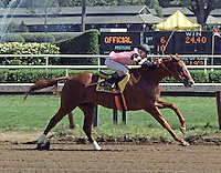 Affirmed Day at Saratoga - public workout 1979.  Affirmed (Exclusive Native) won the 1978 Triple Crown.