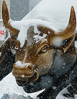"""The New York Stock Exchange Bull """"NYSE Bull"""" is covered with snow during the pass of the winter storm JONAS, in New York, 01/23/2016. Photo by VIEWpress"""