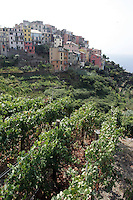 Una veduta di Corniglia, uno dei borghi delle Cinque Terre, con i vigneti in primo piano.<br /> A view of the village of Corniglia atop its cliff, with vineyards on foreground, at the Cinque Terre.<br /> UPDATE IMAGES PRESS/Riccardo De Luca