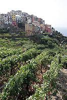 Una veduta di Corniglia, uno dei borghi delle Cinque Terre, con i vigneti in primo piano.<br /> A view of the village of Corniglia atop its cliff, with vineyards on foreground, at the Cinque Terre.<br /> UPDATE IMAGES PRESS/Riccardo De Luca