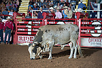 Bull during second round of the Fort Worth Stockyards Pro Rodeo event in Fort Worth, TX - 8.3.2019 Photo by Christopher Thompson