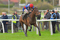 Winner of The SW Catering Handicap Chase Shintori ridden by Nick Schofiled and trained by Jack Barber during Horse Racing at Plumpton Racecourse on 4th November 2019
