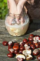 Seife aus Kastanien, Kastanienseife, Kastanien-Seife, Kind, Junge macht aus den Früchten der Rosskastanie Seife, die waschwirksamen Saponine lösen sich und das Wasser beginnt zu schäumen, die Saponine der Früchte dienen als Waschsubstanz, Gewöhnliche Rosskastanie, Roßkastanie, Reife Früchte, Ross-Kastanie, Roß-Kastanie, Kastanie, Aesculus hippocastanum, Horse Chestnut, Marronnier d`Inde