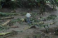 ST0109. SANTIAGO (REPÚBLICA DOMINICANA), 06/06/2011.- Un hombre camina entre un conjunto de árboles caídos hoy, lunes 6 de junio de 2011, en Santiago (República Dominicana), donde las constantes lluvias de las últimas horas han provocado la crecida del río Licey, dejando 546 casas inundadas y 12 destruidas. EFE/José Bueno..