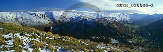 Tom Mackie, LANDSCAPES, panoramic, photos, Sheep on Hallin Fell in Winter, Lake Disrict National Park, Cumbria, England, GBTM030044-1,#L#