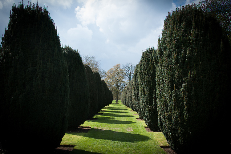 Avenue of clipped yew trees, Hinton Ampner, Hampshire, late April.