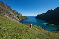 Female hiker ascending grassy hillside above Djupfjord on way to Veinestind, Moskenesøy, Lofoten Islands, Norway