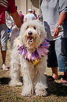 Sir Winston, a 3-year- old Golden Doodle, and hundreds of other four-legged friends took part in the festive fun at the Fourth Annual Mardi Paws Parade & Pet Fest, hosted by Collier Spay Neuter Clinic, at the Mercato Shopping Center, Naples, Florida, USA, Feb. 26, 2011. The Mardi Gras-themed celebration included a pet parade, live music, costume contests, vendors and adoptable homeless pets. Photo by Debi Pittman Wilkey