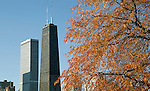 The Water Tower Place and the John Hancock Center framed by fall foliage on the Chicago waterfront, Nov. 10, 2013. (Photo by Jamie Moncrief)