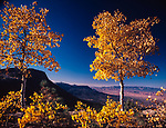 Autumn,Lukachuckai Mountain,Arizona