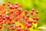 Berries. Selective focus.