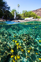 Visitors viewing the Captain Cook Monument while yellow tang feed in nearby waters at Kealakekua Bay, Big Island