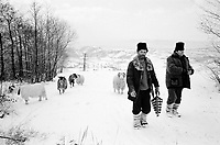 ROMANIA / Maramures / Valeni / January 2003..Villagers on their way back from a weekly livestock market crest the hill surrounding Valeni...© Davin Ellicson / Anzenberger..