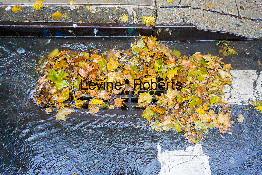 A partially clogged storm drain, filled with the remains of colorful fall foliage, in the Chelsea neighborhood of New York on Tuesday, November 15, 2016. Much needed heavy rain hit the city this morning clogging drains and causing hard to maneuver puddles with leaves and other detritus. (© Richard b. Levine)
