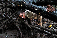 A Colombian man picks shellfish from the mud among the tree roots in the mangrove swamps on the Pacific coast, Colombia, 12 June 2010. Deep in the impenetrable labyrinth of mangrove swamps on the Pacific seashore, hundreds of people struggle everyday, searching and gathering a tiny shellfish called 'piangua'. Wading through sticky mud among the mangrove tree roots, facing the clouds of mosquitos, they pick up mussels hidden deep in mud, no matter of unbearable tropical heat or strong rain. Although the shellfish pickers, mostly Afro-Colombians displaced by the Colombian armed conflict, take a high risk (malaria, poisonous bites,...), their salary is very low and keeps them living in extreme poverty.