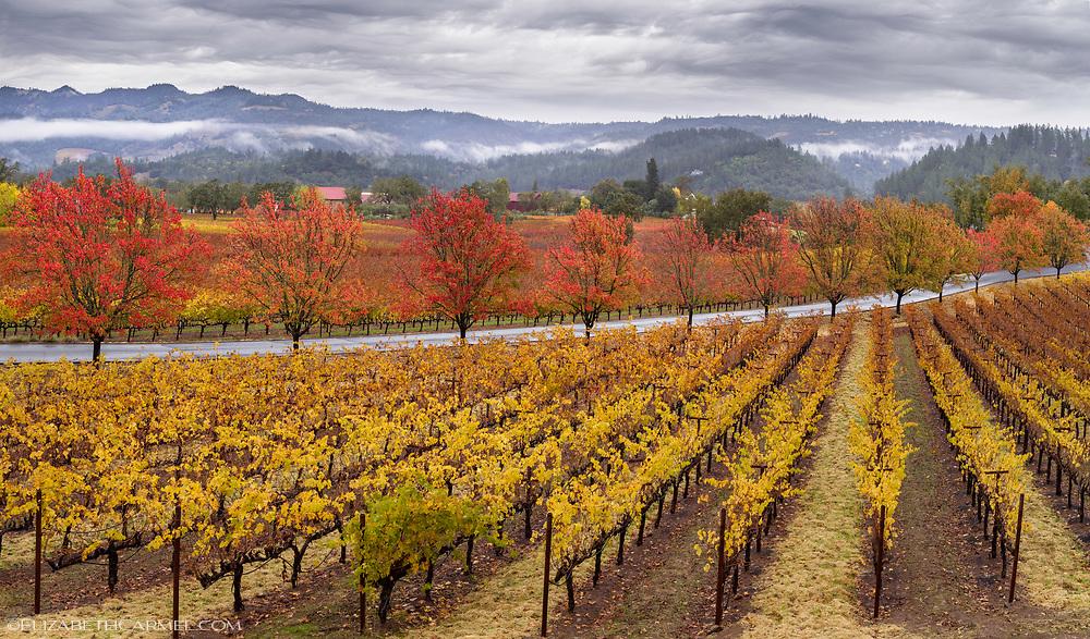 Trinchero Autumn