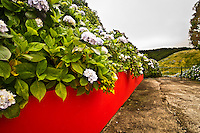 Red wall leading to  a gate of a private property in Flores island, Azores