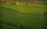 A3AANB Golf course driving range with yellow balls over the fairway and greens