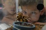SLC - Bugs & Butterflies